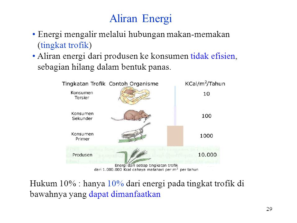 29 Energi mengalir melalui hubungan makan-memakan (tingkat trofik) Aliran energi dari produsen ke konsumen tidak efisien, sebagian hilang dalam bentuk panas.