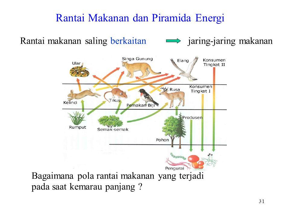 Rantai makanan saling berkaitanjaring-jaring makanan Rantai Makanan dan Piramida Energi Bagaimana pola rantai makanan yang terjadi pada saat kemarau panjang .