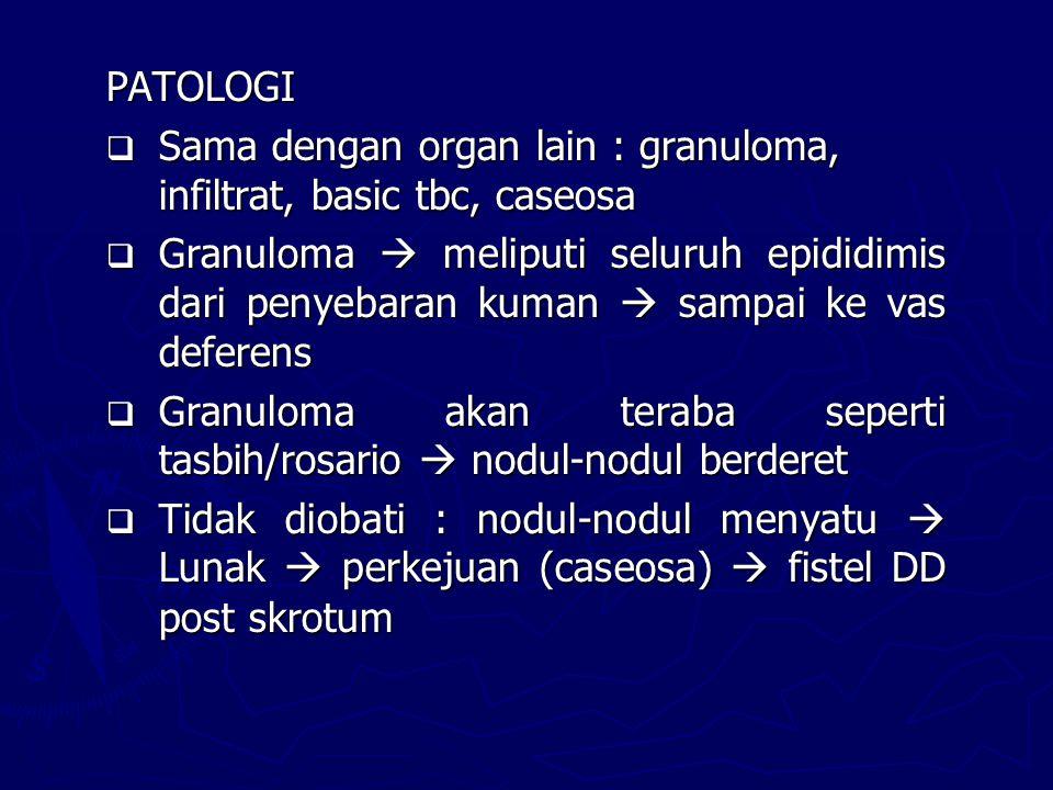 PATOLOGI  Sama dengan organ lain : granuloma, infiltrat, basic tbc, caseosa  Granuloma  meliputi seluruh epididimis dari penyebaran kuman  sampai