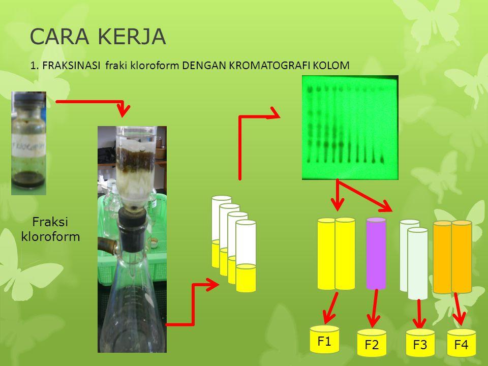 CARA KERJA 1. FRAKSINASI fraki kloroform DENGAN KROMATOGRAFI KOLOM F1 F2F3F4 Fraksi kloroform