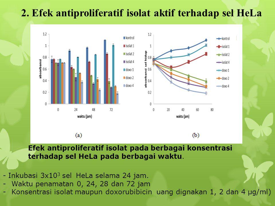 Efek antiproliferatif isolat pada berbagai konsentrasi terhadap sel HeLa pada berbagai waktu. 2. Efek antiproliferatif isolat aktif terhadap sel HeLa