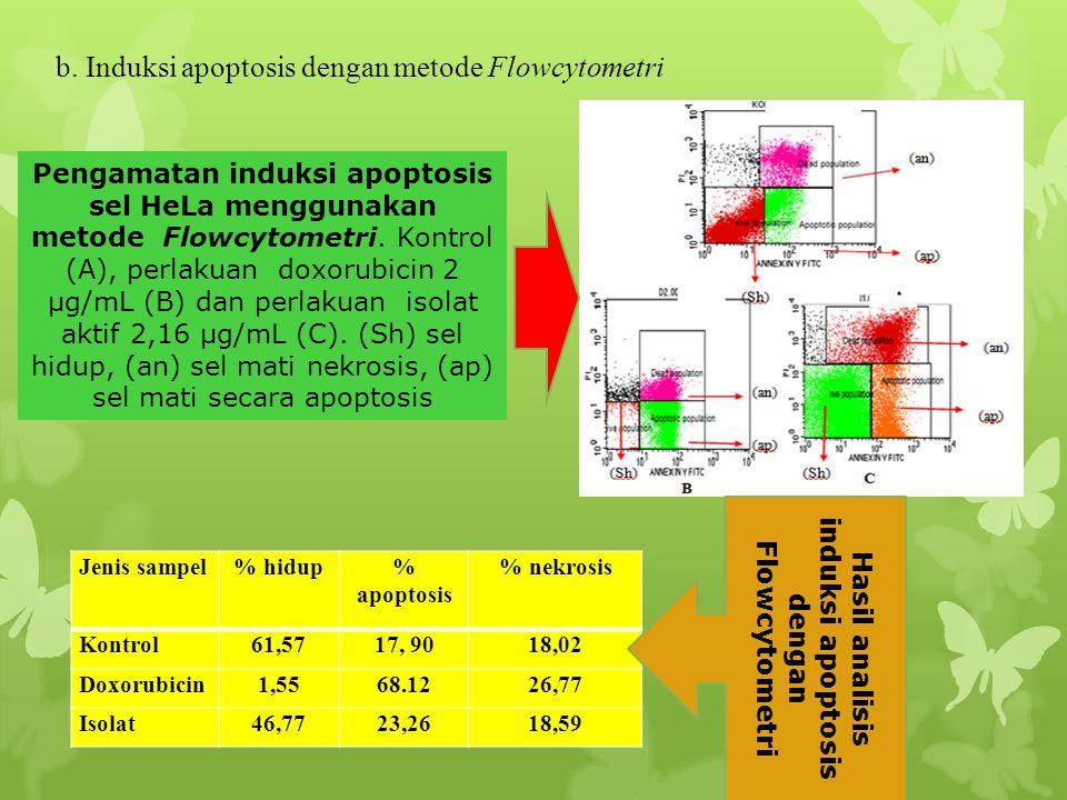 b. Induksi apoptosis dengan metode Flowcytometri Pengamatan induksi apoptosis sel HeLa menggunakan metode Flowcytometri. Kontrol (A), perlakuan doxoru