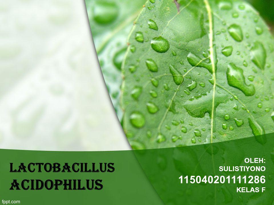 Lactobacillus acidophilus OLEH: SULISTIYONO 115040201111286 KELAS F