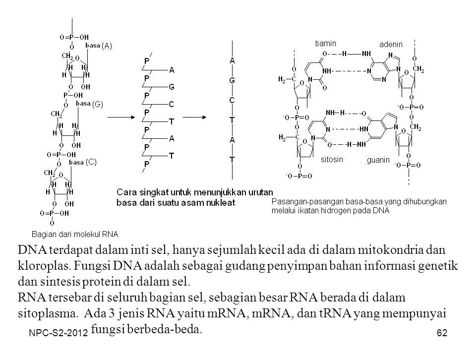 62 DNA terdapat dalam inti sel, hanya sejumlah kecil ada di dalam mitokondria dan kloroplas. Fungsi DNA adalah sebagai gudang penyimpan bahan informas