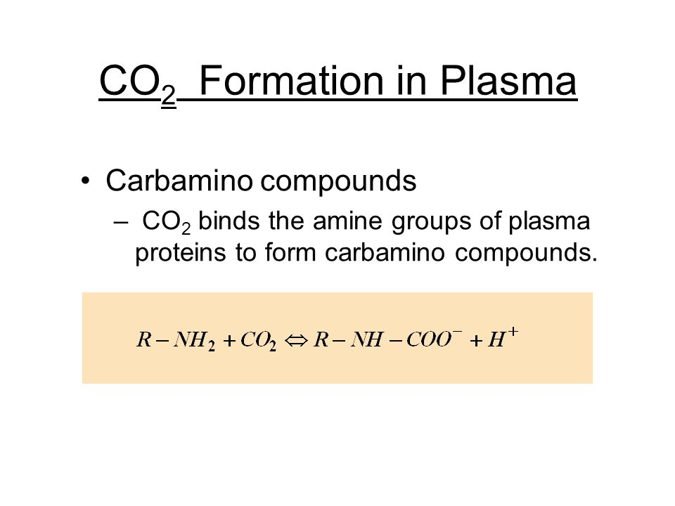 CO 2 Formation in Plasma Carbamino compounds – CO 2 binds the amine groups of plasma proteins to form carbamino compounds.