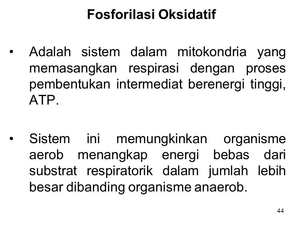 44 Fosforilasi Oksidatif Adalah sistem dalam mitokondria yang memasangkan respirasi dengan proses pembentukan intermediat berenergi tinggi, ATP.