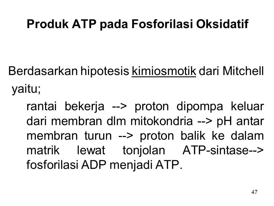 47 Produk ATP pada Fosforilasi Oksidatif Berdasarkan hipotesis kimiosmotik dari Mitchell yaitu; rantai bekerja --> proton dipompa keluar dari membran dlm mitokondria --> pH antar membran turun --> proton balik ke dalam matrik lewat tonjolan ATP-sintase--> fosforilasi ADP menjadi ATP.