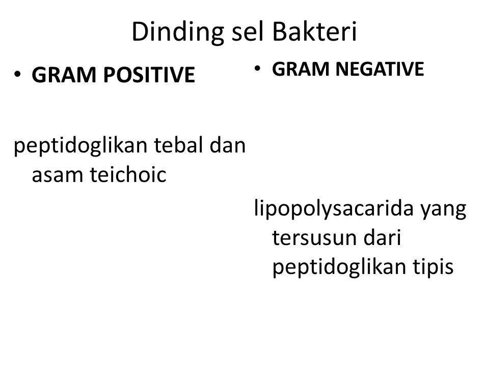 Sekunder kapsul atau lapisan lendir flagellum pilus fimbria klorosom vakuola gas endospora