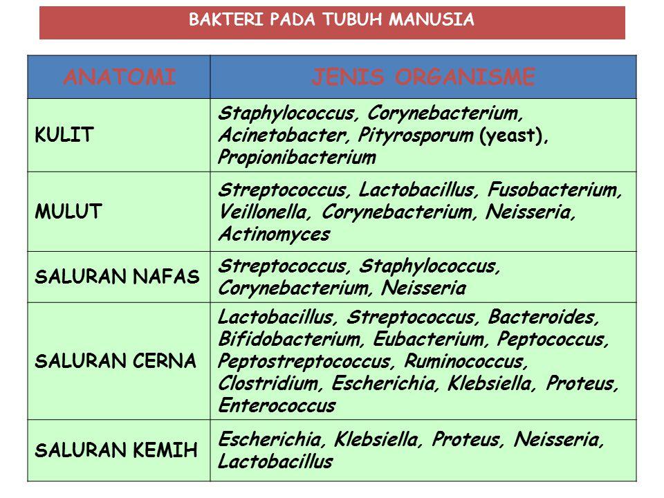 ANATOMIJENIS ORGANISME KULIT Staphylococcus, Corynebacterium, Acinetobacter, Pityrosporum (yeast), Propionibacterium MULUT Streptococcus, Lactobacillu