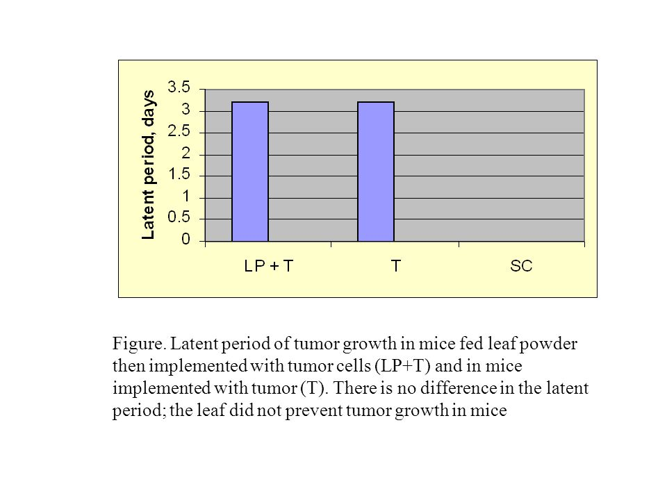 Figure. Latent period of tumor growth in mice fed leaf powder then implemented with tumor cells (LP+T) and in mice implemented with tumor (T). There i