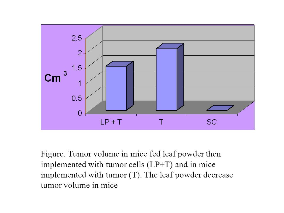 Figure. Tumor volume in mice fed leaf powder then implemented with tumor cells (LP+T) and in mice implemented with tumor (T). The leaf powder decrease