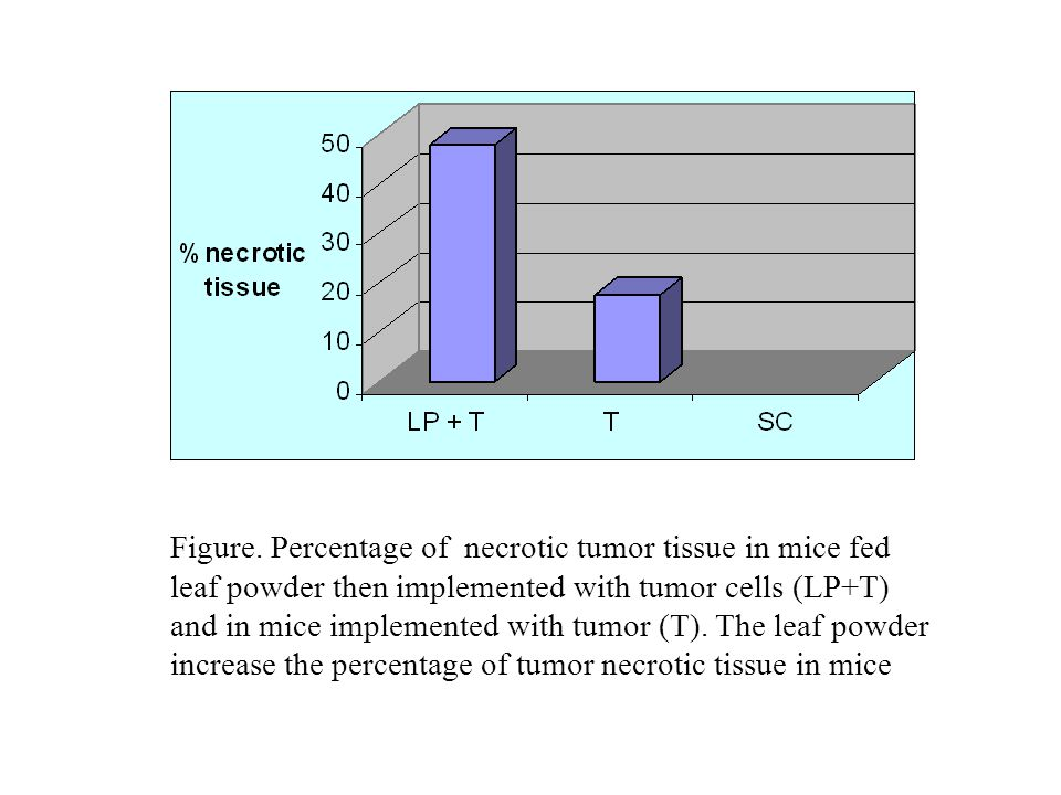 Figure. Percentage of necrotic tumor tissue in mice fed leaf powder then implemented with tumor cells (LP+T) and in mice implemented with tumor (T). T