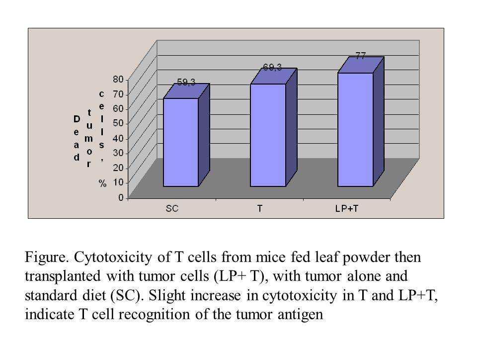 Figure. Cytotoxicity of T cells from mice fed leaf powder then transplanted with tumor cells (LP+ T), with tumor alone and standard diet (SC). Slight