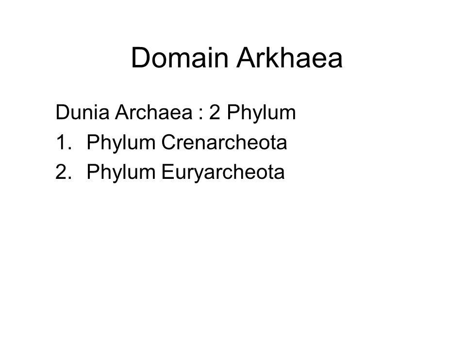 Domain Arkhaea Dunia Archaea : 2 Phylum 1.Phylum Crenarcheota 2.Phylum Euryarcheota