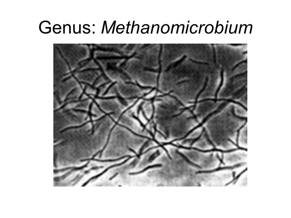 Genus: Methanomicrobium