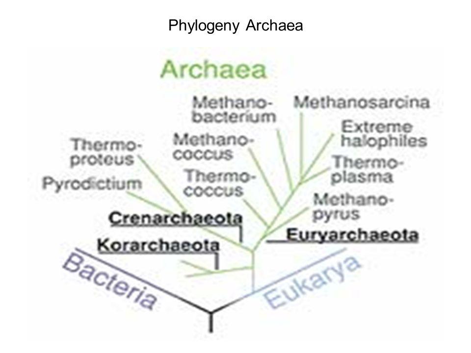 Thermophilic Archaea Sulfolobussolfataricus
