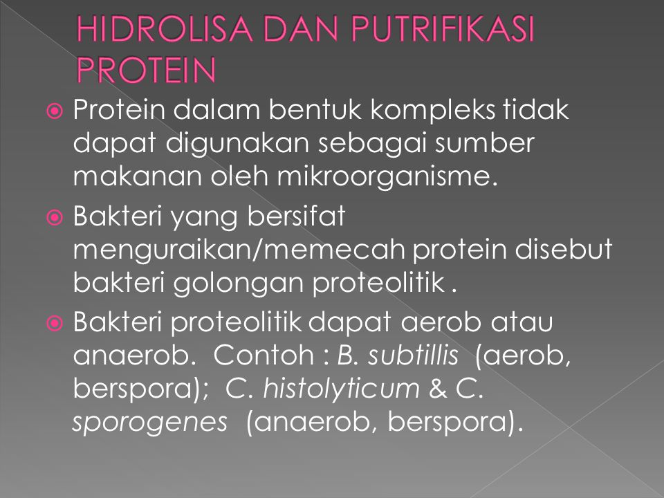  Protein dalam bentuk kompleks tidak dapat digunakan sebagai sumber makanan oleh mikroorganisme.  Bakteri yang bersifat menguraikan/memecah protein