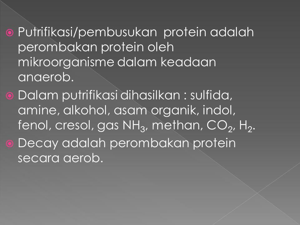  Putrifikasi/pembusukan protein adalah perombakan protein oleh mikroorganisme dalam keadaan anaerob.  Dalam putrifikasi dihasilkan : sulfida, amine,