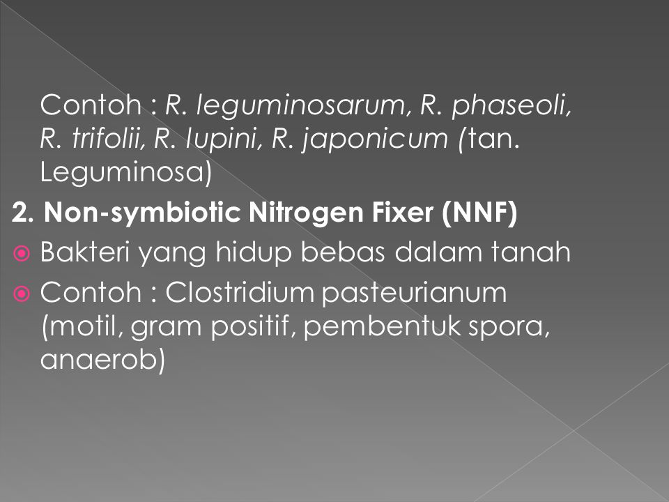 Contoh : R. leguminosarum, R. phaseoli, R. trifolii, R. lupini, R. japonicum (tan. Leguminosa) 2. Non-symbiotic Nitrogen Fixer (NNF)  Bakteri yang hi