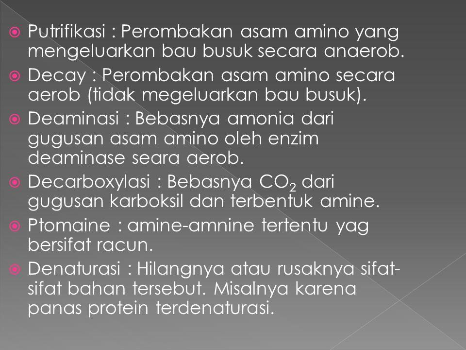  Putrifikasi : Perombakan asam amino yang mengeluarkan bau busuk secara anaerob.  Decay : Perombakan asam amino secara aerob (tidak megeluarkan bau