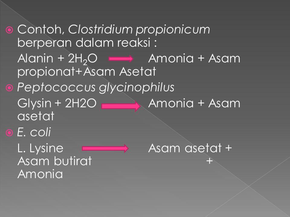  Contoh, Clostridium propionicum berperan dalam reaksi : Alanin + 2H 2 O Amonia + Asam propionat+Asam Asetat  Peptococcus glycinophilus Glysin + 2H2