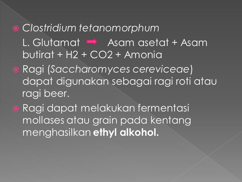  Clostridium tetanomorphum L. GlutamatAsam asetat + Asam butirat + H2 + CO2 + Amonia  Ragi (Saccharomyces cereviceae) dapat digunakan sebagai ragi r