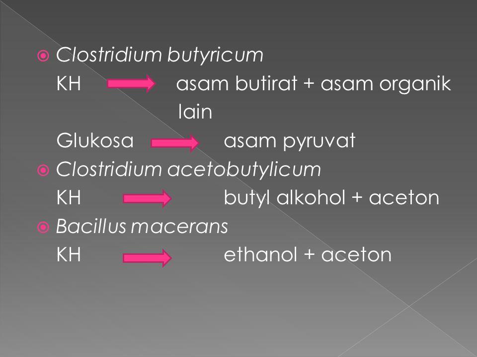  Clostridium butyricum KH asam butirat + asam organik lain Glukosa asam pyruvat  Clostridium acetobutylicum KH butyl alkohol + aceton  Bacillus mac