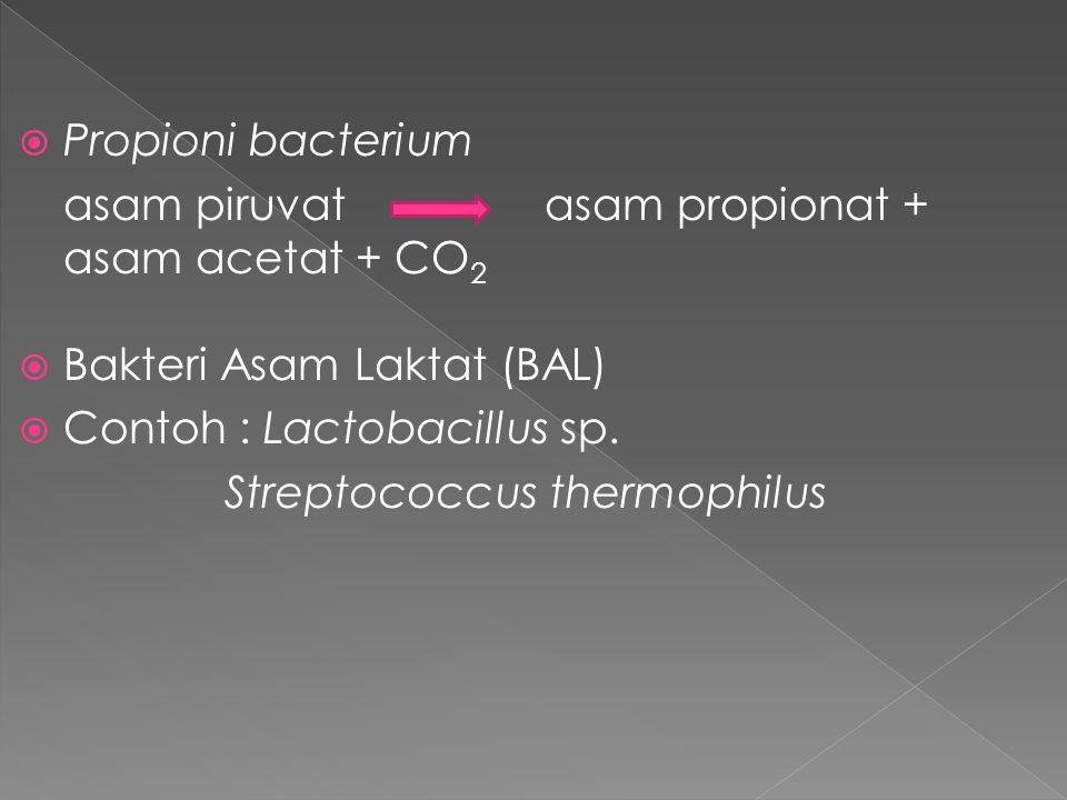  Propioni bacterium asam piruvatasam propionat + asam acetat + CO 2  Bakteri Asam Laktat (BAL)  Contoh : Lactobacillus sp. Streptococcus thermophil