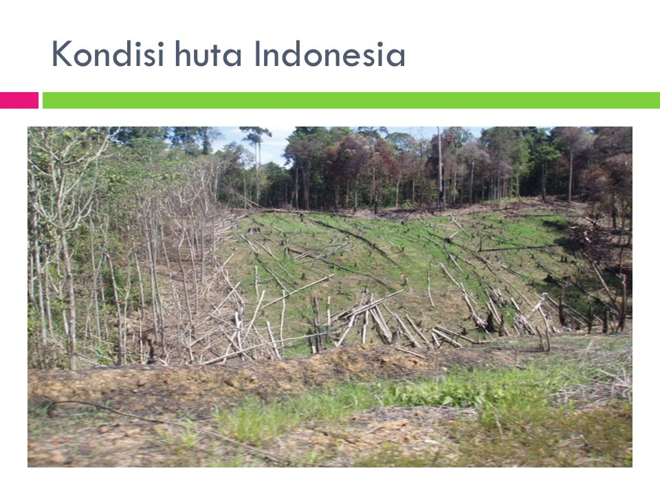 Kondisi huta Indonesia