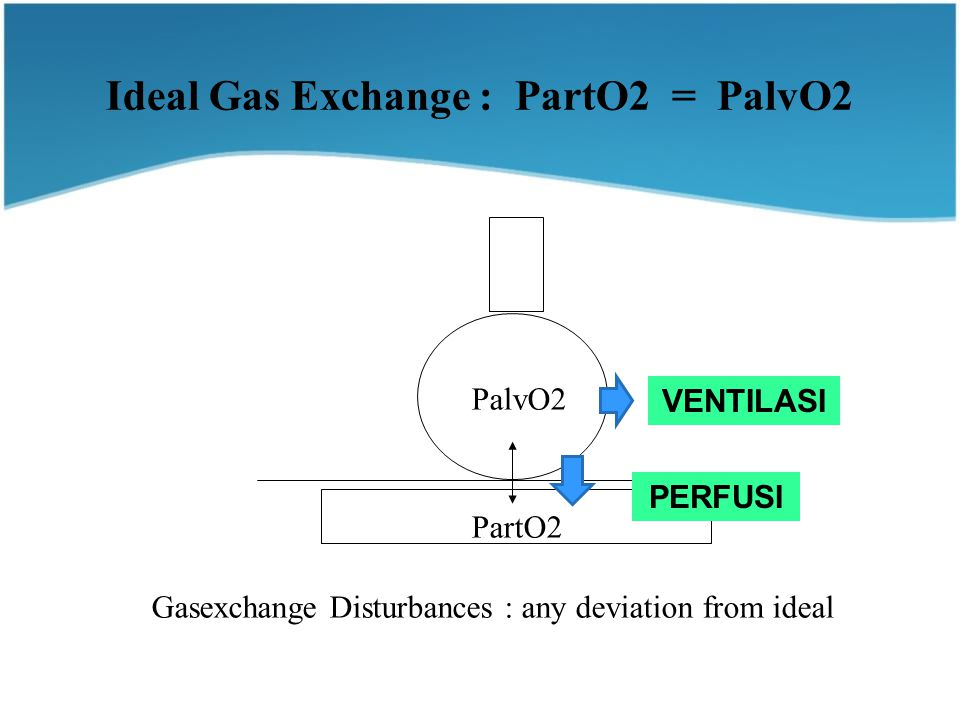 Ideal Gas Exchange : PartO2 = PalvO2 PalvO2 PartO2 Gasexchange Disturbances : any deviation from ideal VENTILASI PERFUSI