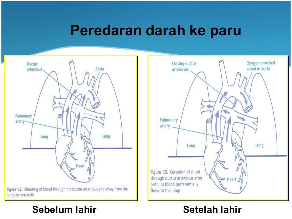 Sebelum lahirSetelah lahir Peredaran darah ke paru