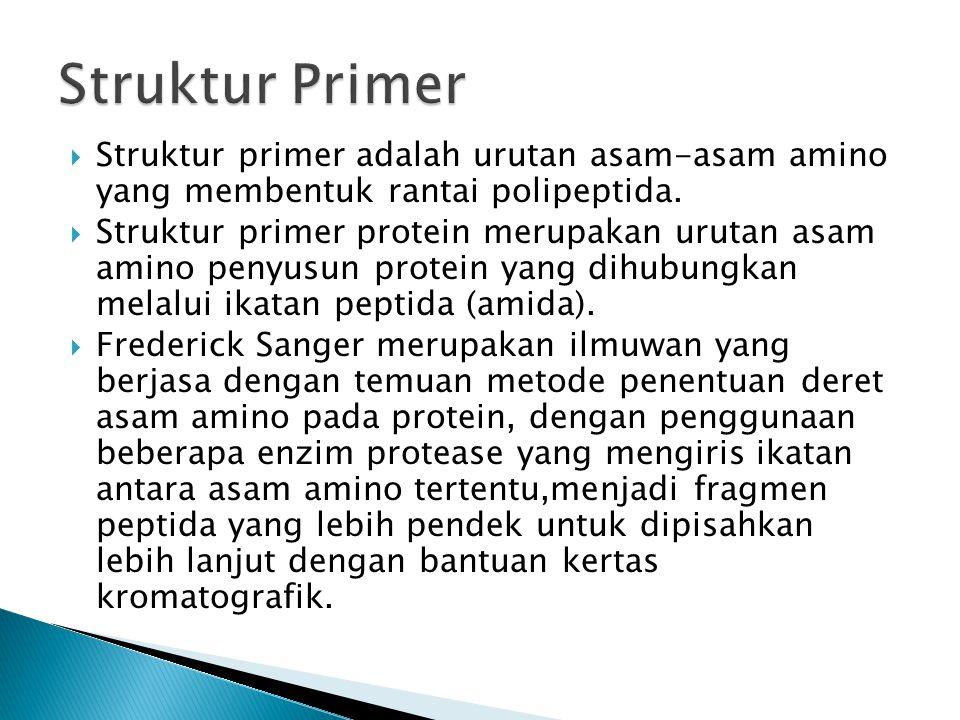  Struktur primer adalah urutan asam-asam amino yang membentuk rantai polipeptida.  Struktur primer protein merupakan urutan asam amino penyusun prot