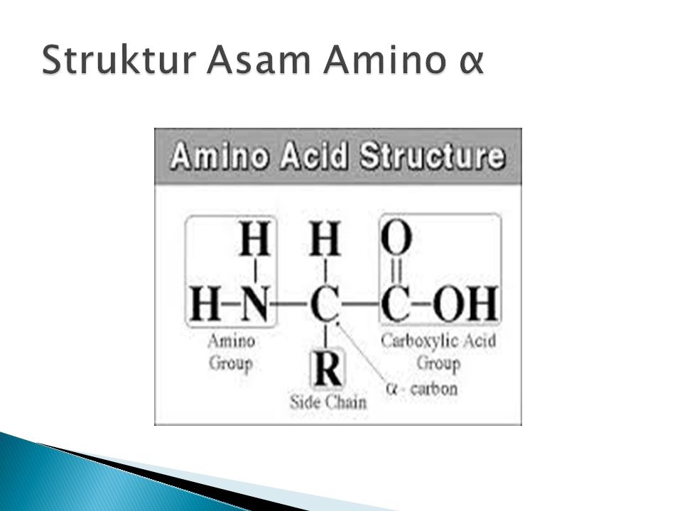  Alanin (alanine),  Arginin (arginine),  Asparagin (asparagine),  Asam aspartat (aspartic acid),  Glutamin (Glutamine),  Asam glutamat (glutamic acid),  Glisin (Glycinen (isoleucine),  Leusin (leucine),