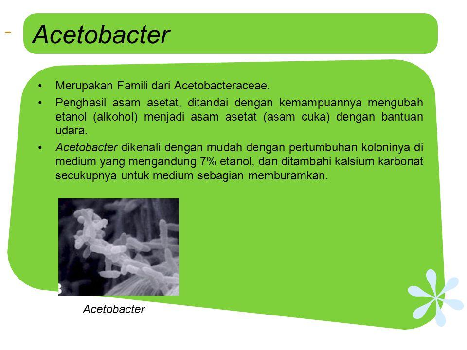 Acetobacter Merupakan Famili dari Acetobacteraceae. Penghasil asam asetat, ditandai dengan kemampuannya mengubah etanol (alkohol) menjadi asam asetat