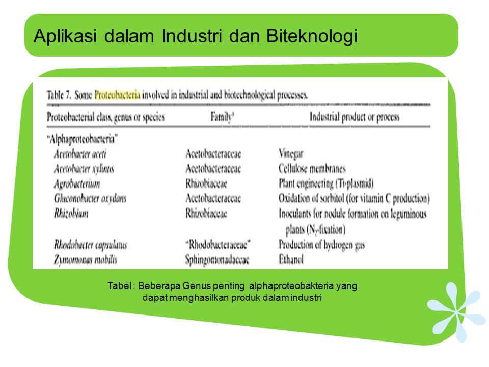 Aplikasi dalam Industri dan Biteknologi Tabel : Beberapa Genus penting alphaproteobakteria yang dapat menghasilkan produk dalam industri