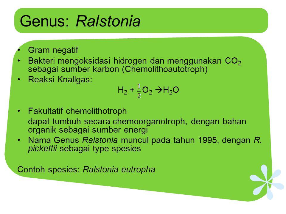 Genus: Ralstonia Gram negatif Bakteri mengoksidasi hidrogen dan menggunakan CO 2 sebagai sumber karbon (Chemolithoautotroph) Reaksi Knallgas: H 2 + O