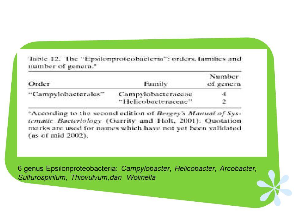 6 genus Epsilonproteobacteria: Campylobacter, Helicobacter, Arcobacter, Sulfurospirilum, Thiovulvum,dan Wolinella