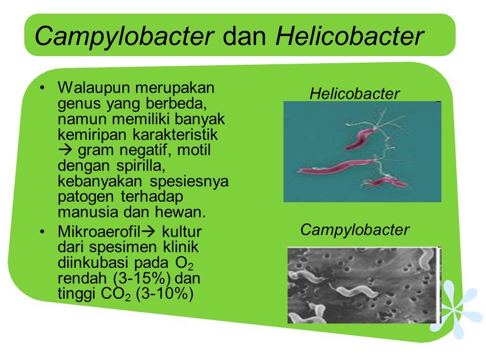Campylobacter dan Helicobacter Walaupun merupakan genus yang berbeda, namun memiliki banyak kemiripan karakteristik  gram negatif, motil dengan spiri
