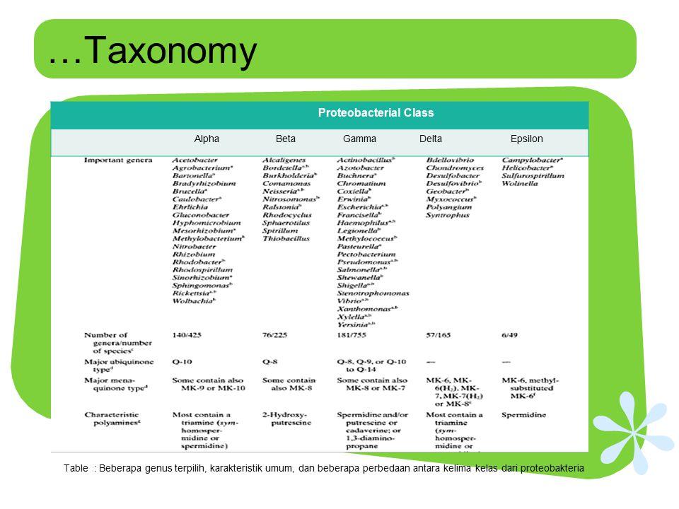 …Taxonomy Proteobacterial Class AlphaBetaGammaDeltaEpsilon Table : Beberapa genus terpilih, karakteristik umum, dan beberapa perbedaan antara kelima k
