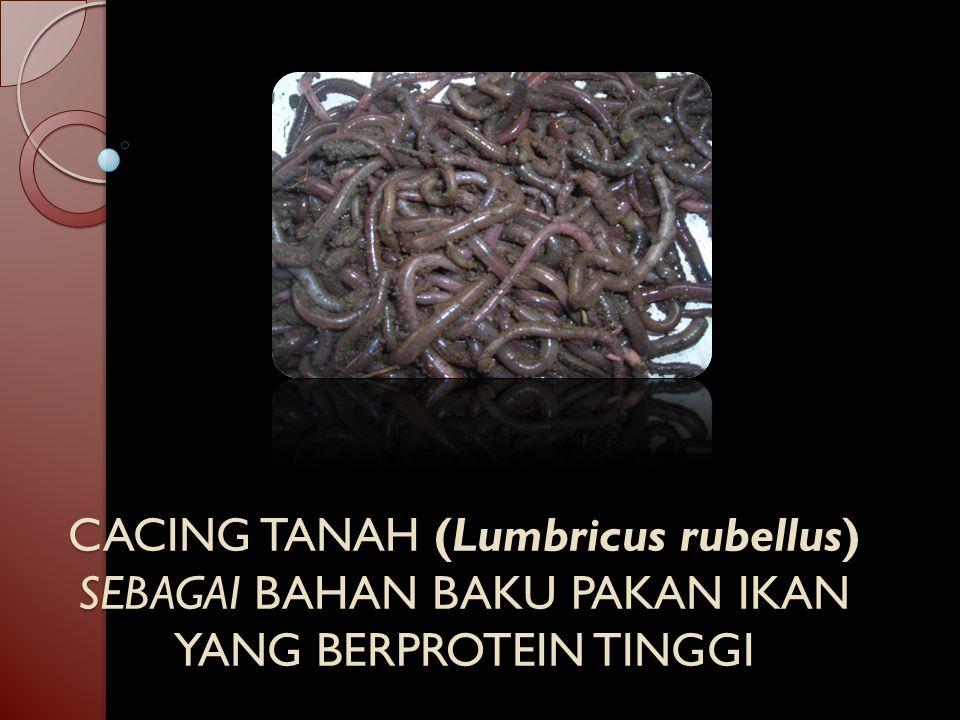 CACING TANAH (Lumbricus rubellus) SEBAGAI BAHAN BAKU PAKAN IKAN YANG BERPROTEIN TINGGI