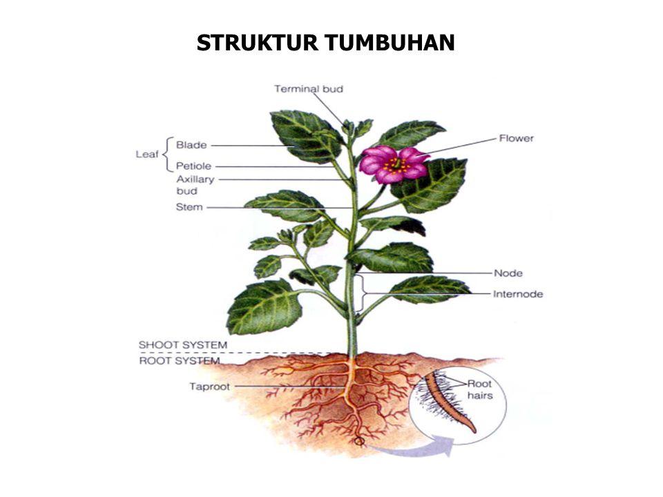 STRUKTUR TUMBUHAN