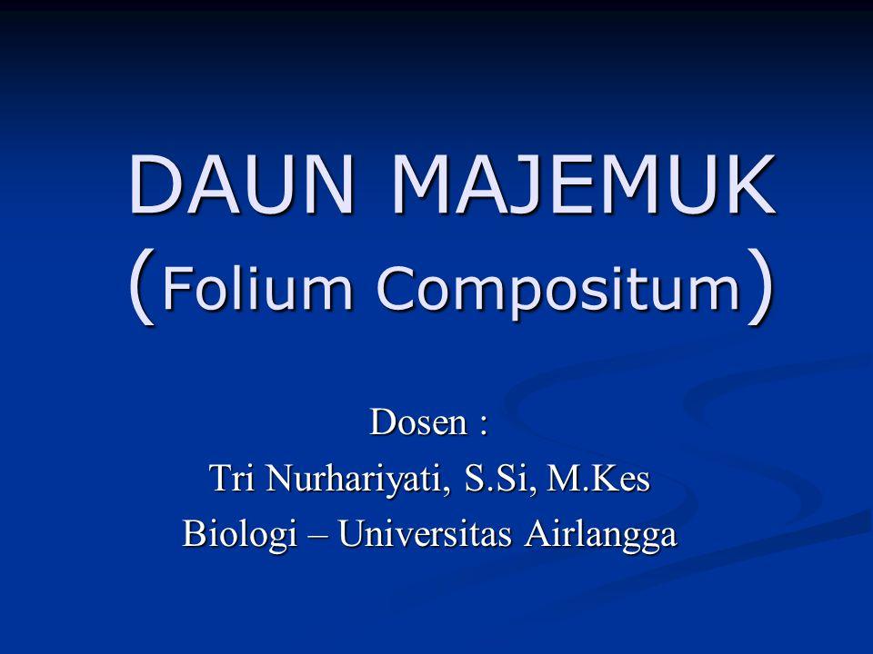 DAUN MAJEMUK ( Folium Compositum ) Dosen : Tri Nurhariyati, S.Si, M.Kes Biologi – Universitas Airlangga