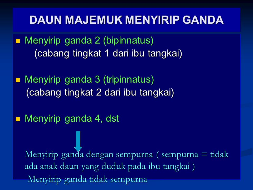 DAUN MAJEMUK MENYIRIP GANDA Menyirip ganda 2 (bipinnatus) Menyirip ganda 2 (bipinnatus) (cabang tingkat 1 dari ibu tangkai) (cabang tingkat 1 dari ibu