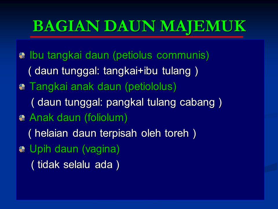 BAGIAN DAUN MAJEMUK Ibu tangkai daun (petiolus communis) ( daun tunggal: tangkai+ibu tulang ) ( daun tunggal: tangkai+ibu tulang ) Tangkai anak daun (