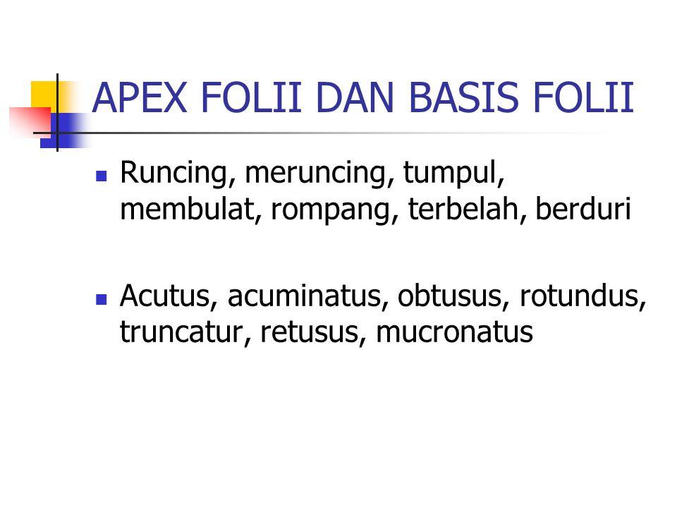 APEX FOLII DAN BASIS FOLII Runcing, meruncing, tumpul, membulat, rompang, terbelah, berduri Acutus, acuminatus, obtusus, rotundus, truncatur, retusus,