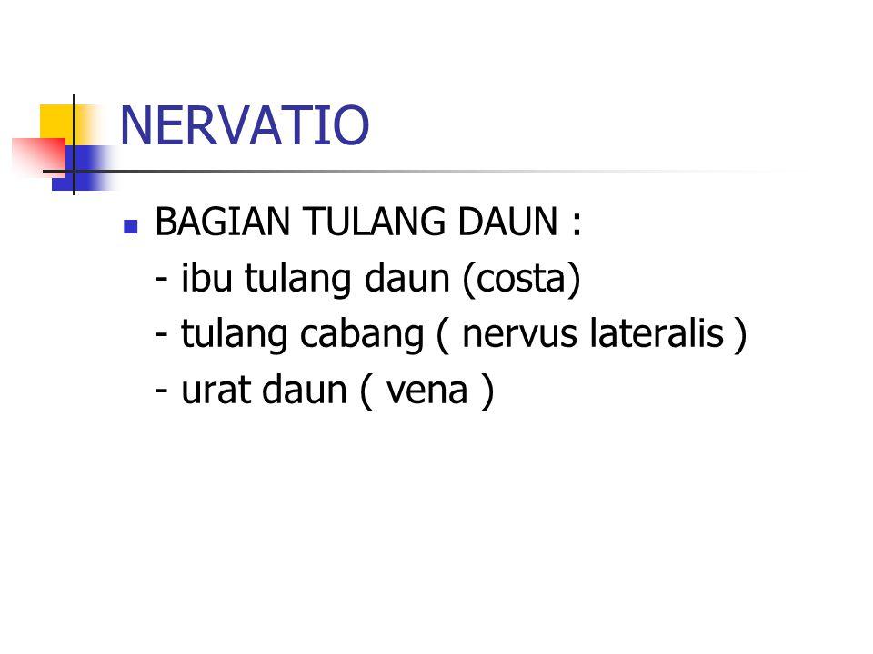 NERVATIO BAGIAN TULANG DAUN : - ibu tulang daun (costa) - tulang cabang ( nervus lateralis ) - urat daun ( vena )