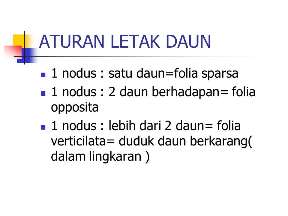 ATURAN LETAK DAUN 1 nodus : satu daun=folia sparsa 1 nodus : 2 daun berhadapan= folia opposita 1 nodus : lebih dari 2 daun= folia verticilata= duduk d