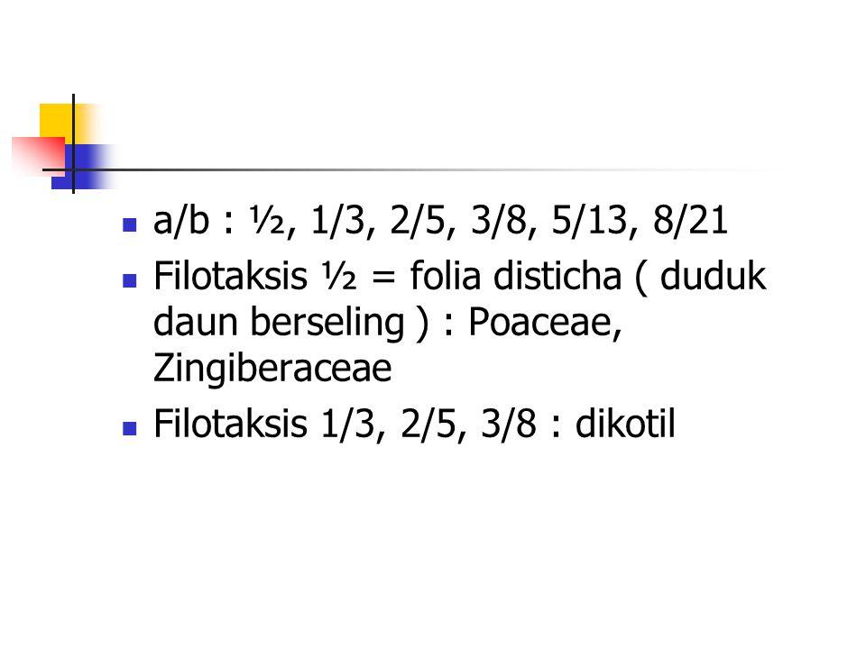a/b : ½, 1/3, 2/5, 3/8, 5/13, 8/21 Filotaksis ½ = folia disticha ( duduk daun berseling ) : Poaceae, Zingiberaceae Filotaksis 1/3, 2/5, 3/8 : dikotil