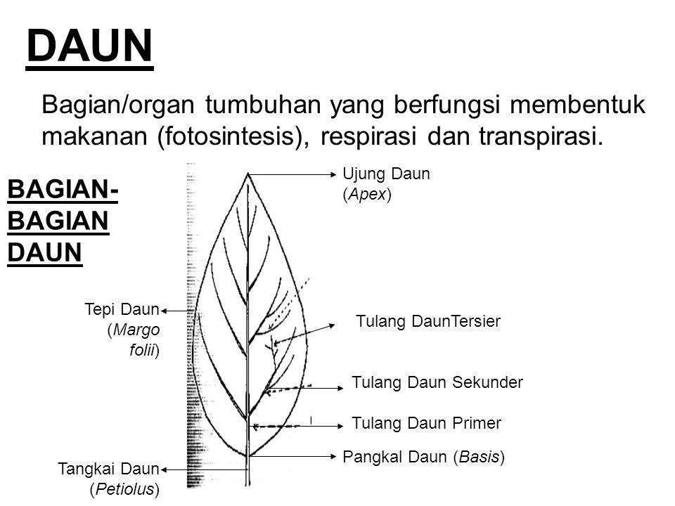 DAUN Bagian/organ tumbuhan yang berfungsi membentuk makanan (fotosintesis), respirasi dan transpirasi. BAGIAN- BAGIAN DAUN Tulang Daun Primer Tulang D
