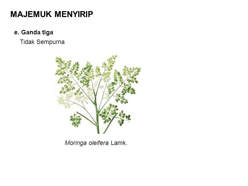 e. Ganda tiga MAJEMUK MENYIRIP Tidak Sempurna Moringa oleifera Lamk.